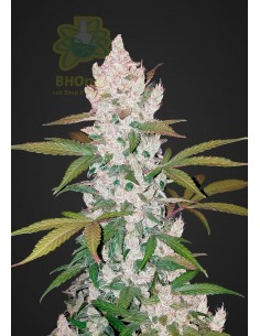 GIRL SCOUT COOKIES AUTO (1)...